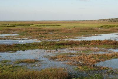 Adelaide River flood plain
