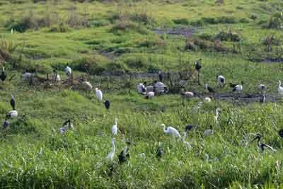 Abundant Bird Life