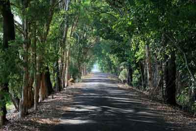 Fogg Dam Road