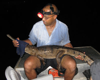 """One of the species we are trying to """"educate"""" to avoid cane toads is the freshwater crocodile."""