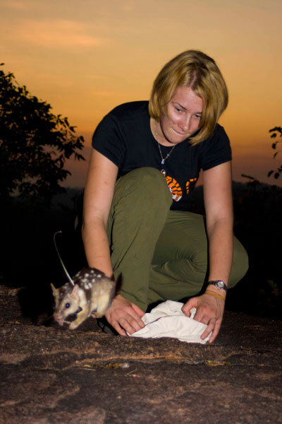 Stephanie O'Donnell's project involved training quolls not to eat toads, then releasing the quolls and radio-tracking them to see if trained animals had better survival. They did! (photo by Jonno Webb)