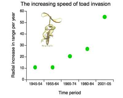 Cane Toad Evolution