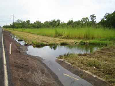 Typical Cane Toad Breeding Site