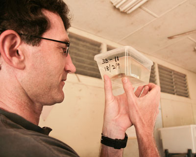 Dr Michael Crossland examines a tadpole.